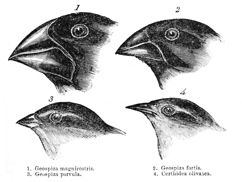 Source: http://beacon-center.org, reprint from Darwin's Journal of Researches
