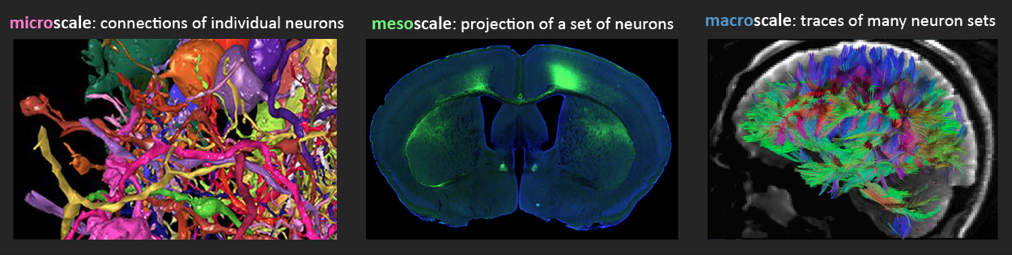 Left to right: Individual connected neurons from a mouse retina (A. Zlateski based on images of K. Briggman, M. Helmstaedter, and W. Denk.), a set of nerve fibers in a mouse brain (http://www.mouseconnectome.org), and many sets of nerve fibers of a live human brain (The Human Connectome Project)