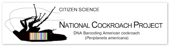 Citizen Science and the American Cockroach