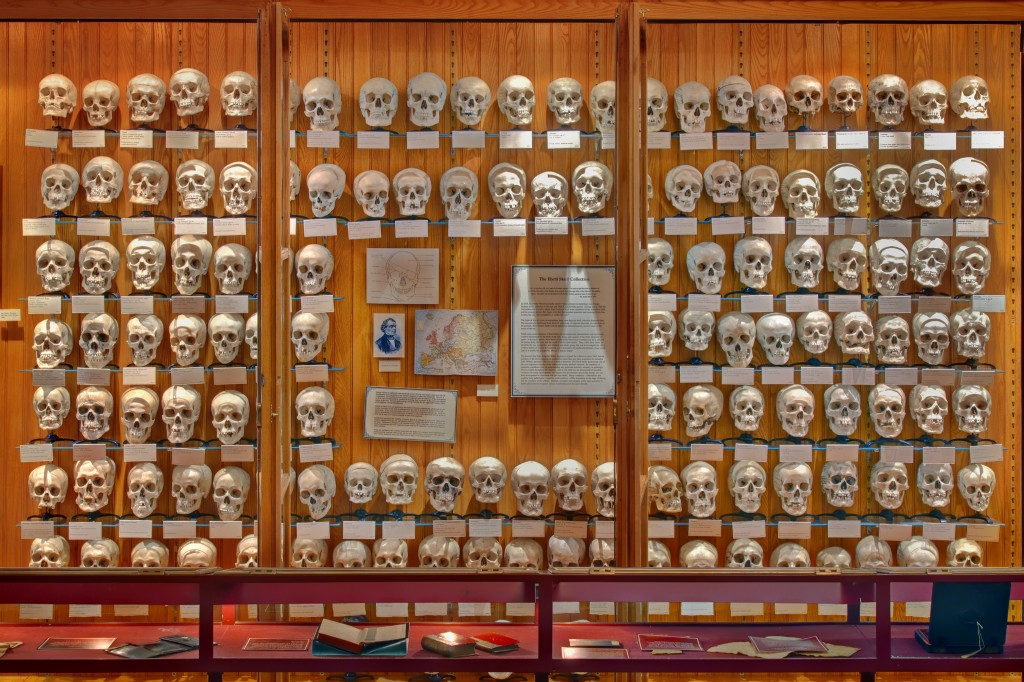 Hyrtl Skull Collection (2009).