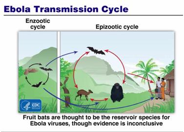 Why I (probably) Won't Catch Ebola